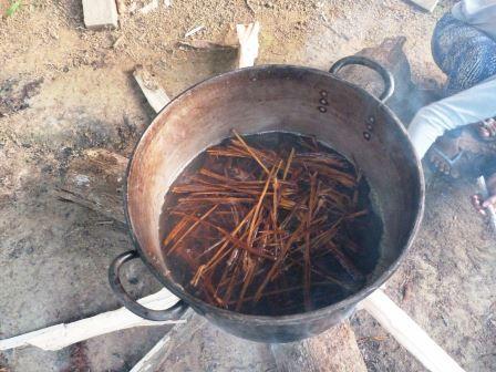 brebaje ayahuasca retiros espirituales en valencia sanando al ser