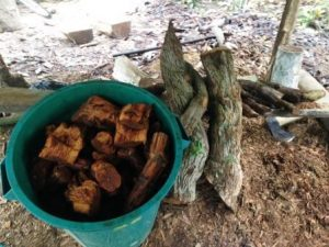 cubo ayahuasca retiros espirituales en benidorm sanando al ser